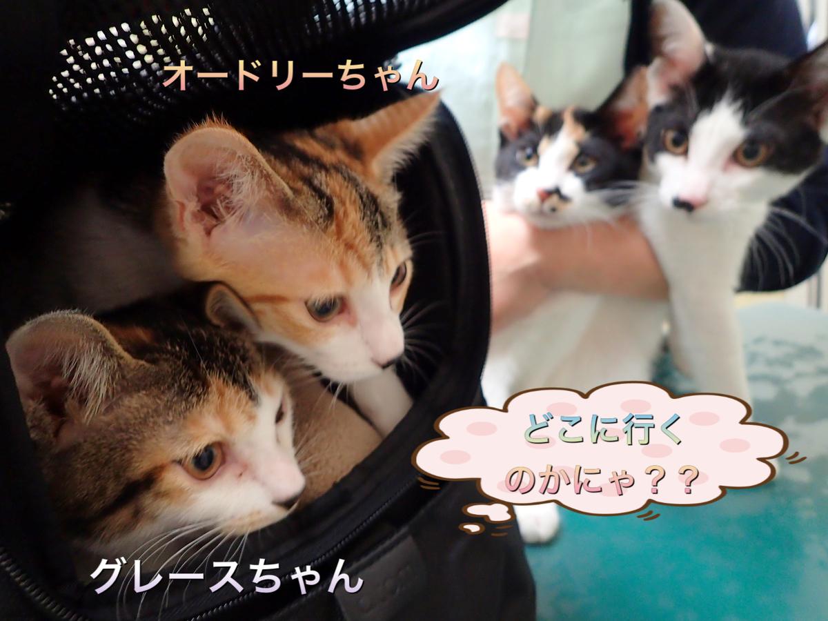 f:id:nozawa_clinic:20200212161956j:plain