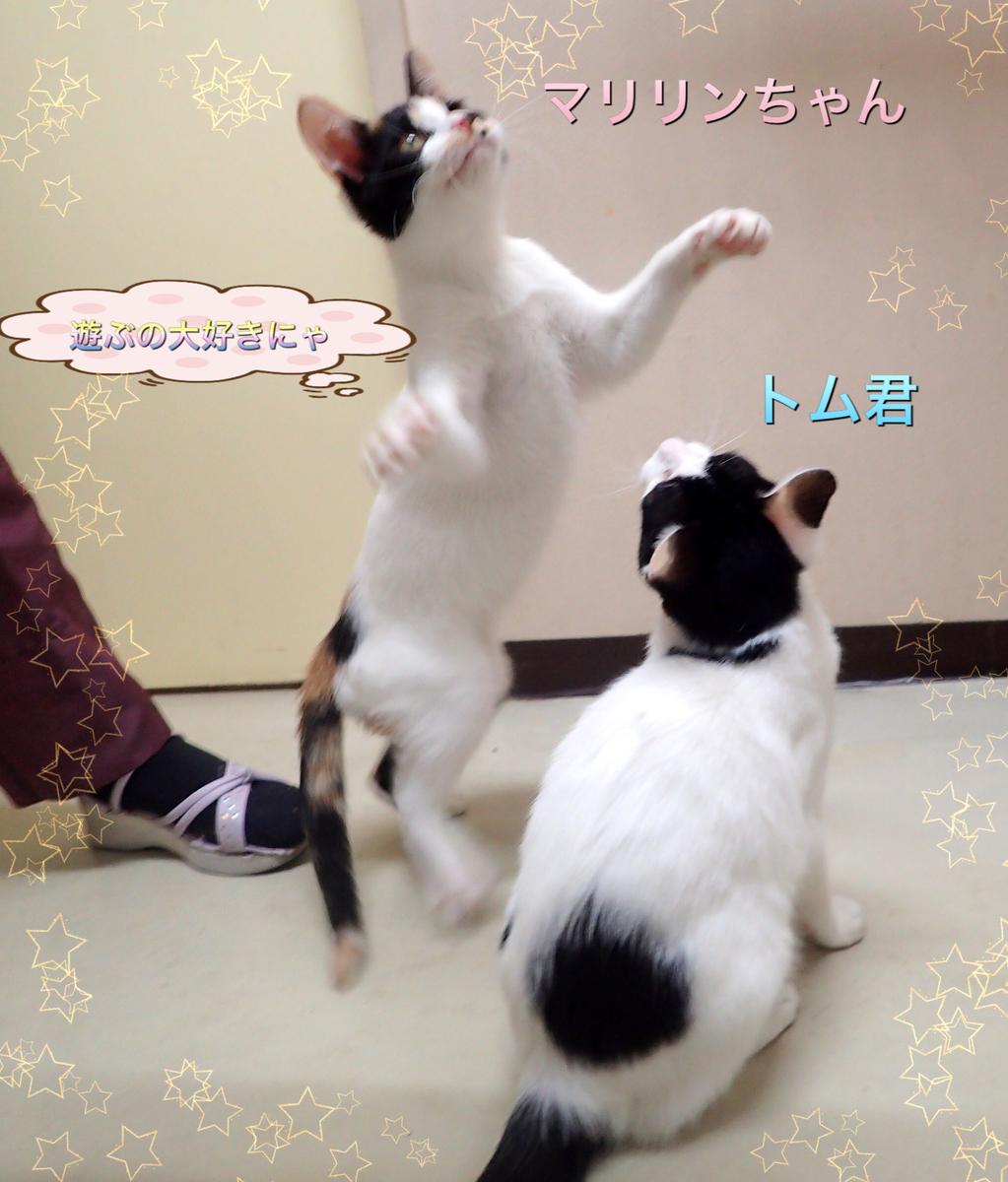 f:id:nozawa_clinic:20200212164225j:plain