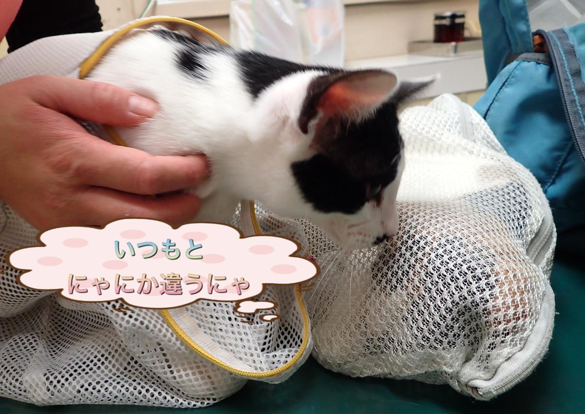 f:id:nozawa_clinic:20200212164456j:plain