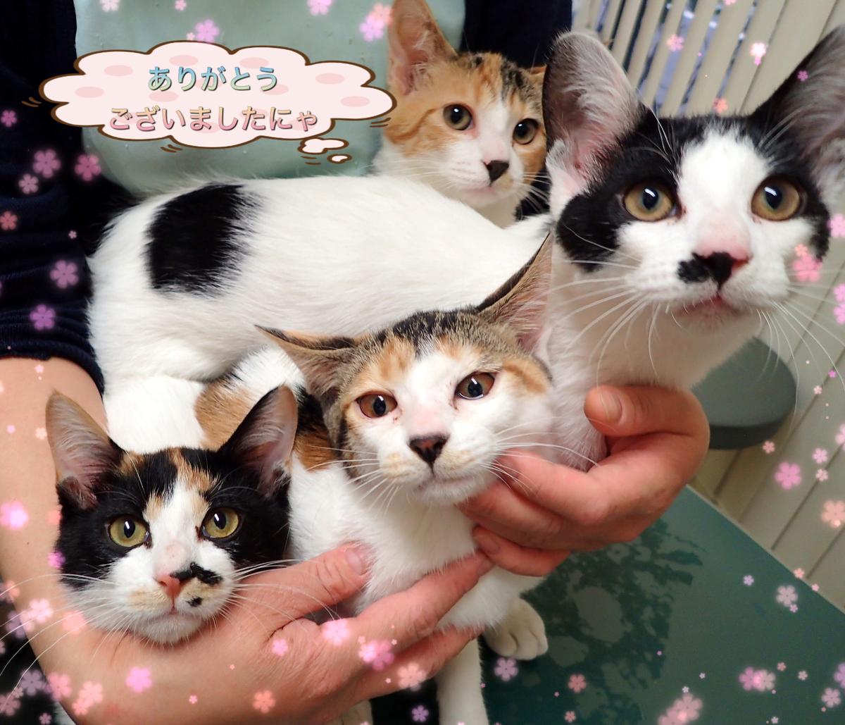 f:id:nozawa_clinic:20200212165635j:plain