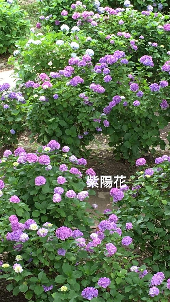 f:id:nozoka_k:20180615165000j:image