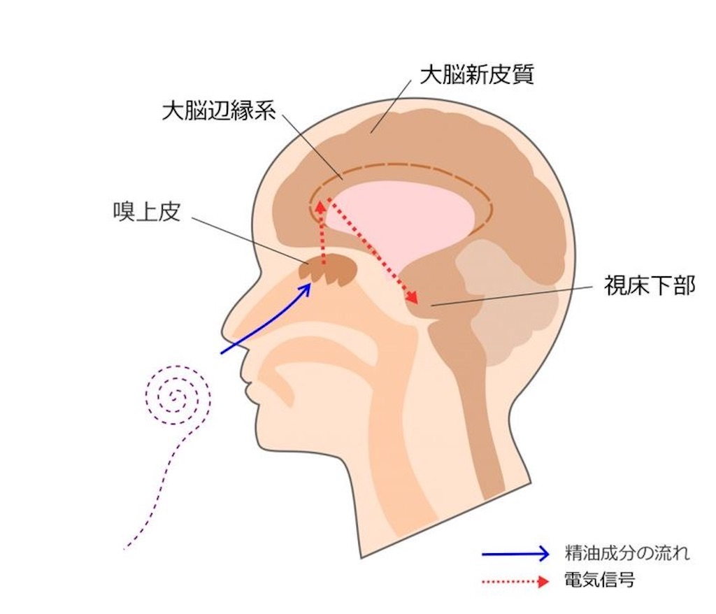 f:id:nozosan-net:20210122145904j:image