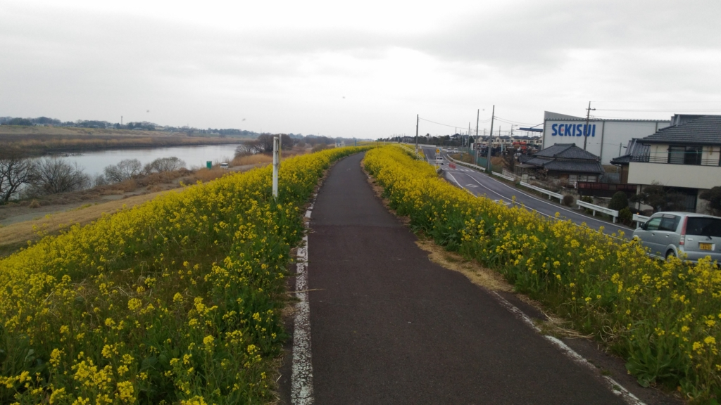 サイクリング(江戸川CR~利根川CR~緑のヘルシーロード ...