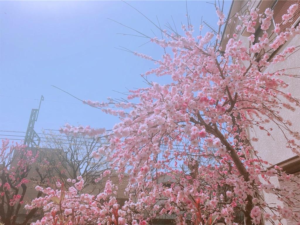 f:id:ns-kodawari:20190301190707j:image