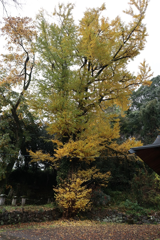 f:id:nshintaro:20181204175109j:plain