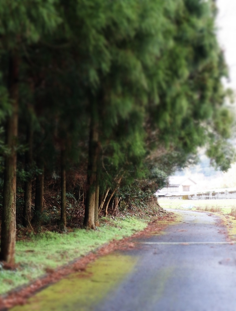 f:id:nshintaro:20190206180518j:plain