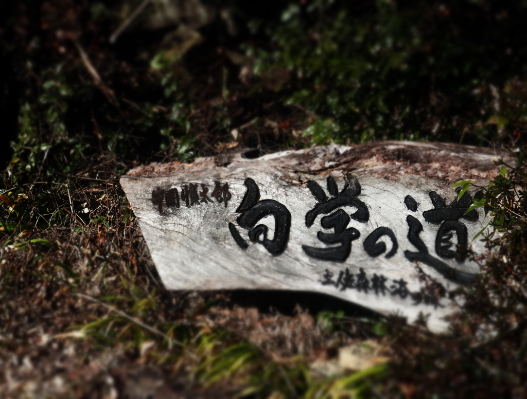 f:id:nshintaro:20190207182205j:plain