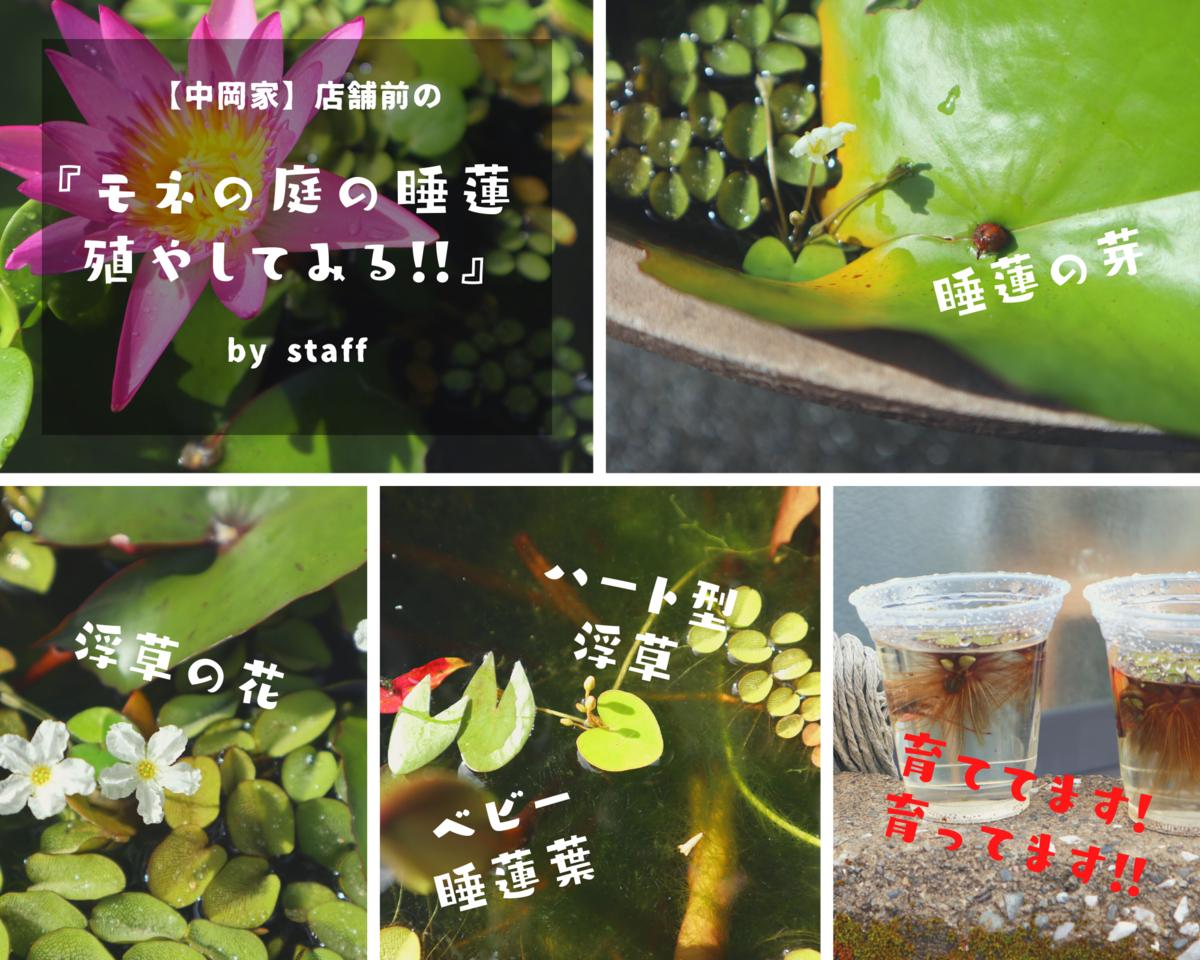 f:id:nshintaro:20200904175309p:plain