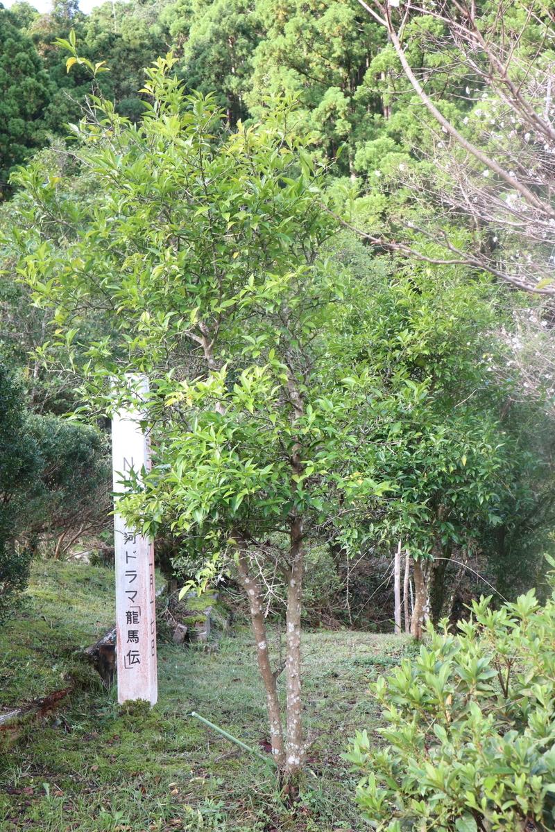 f:id:nshintaro:20201019182737j:plain