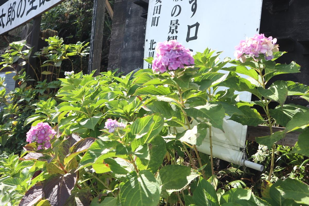 f:id:nshintaro:20201101181608j:plain