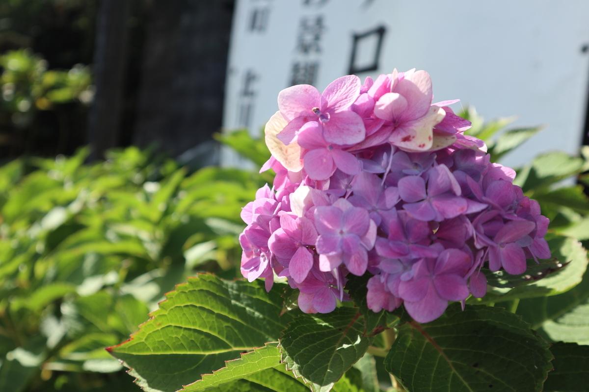 f:id:nshintaro:20201101181612j:plain