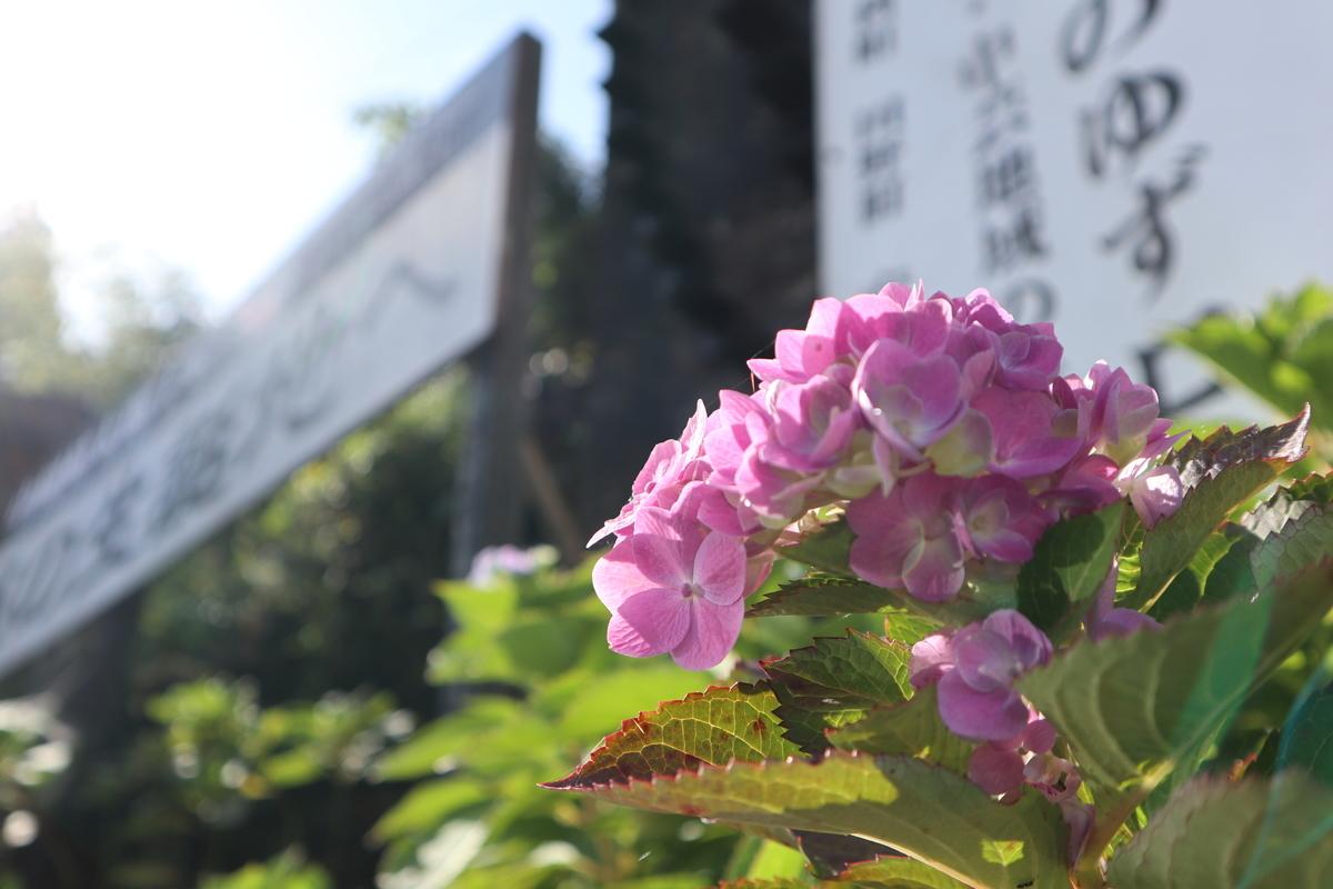 f:id:nshintaro:20201101181616j:plain