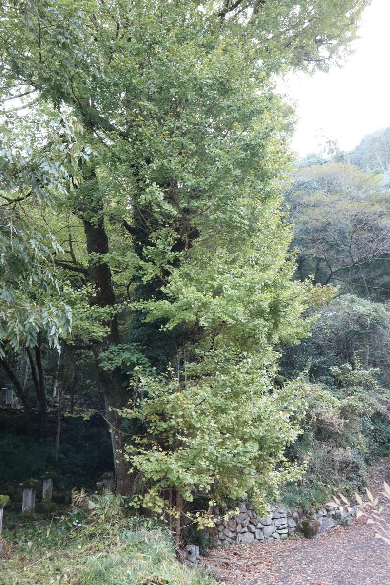 f:id:nshintaro:20201114122322j:plain