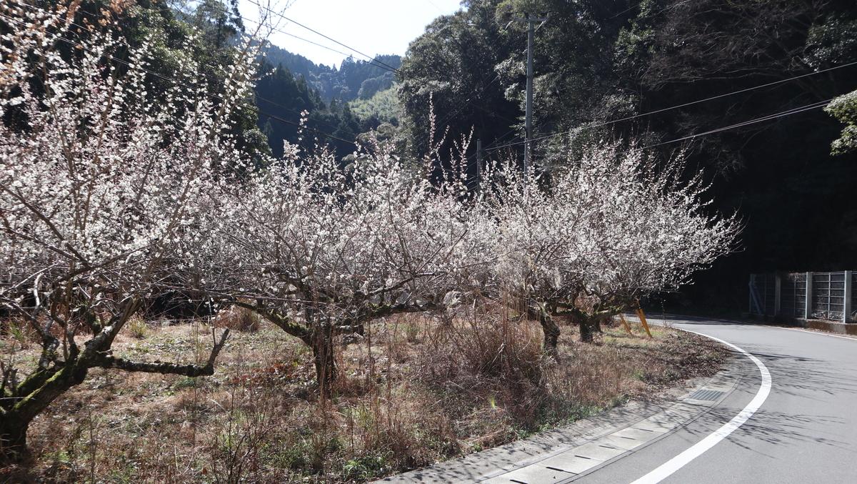f:id:nshintaro:20210225182246j:plain