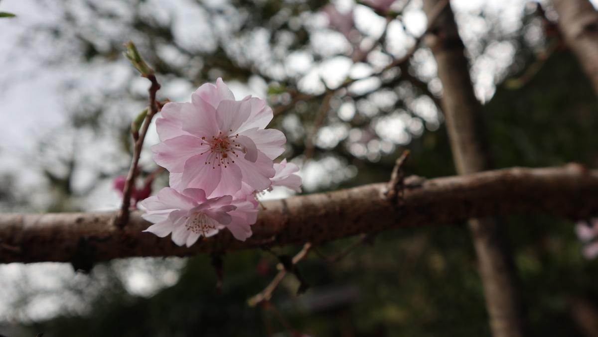 f:id:nshintaro:20210320103759j:plain