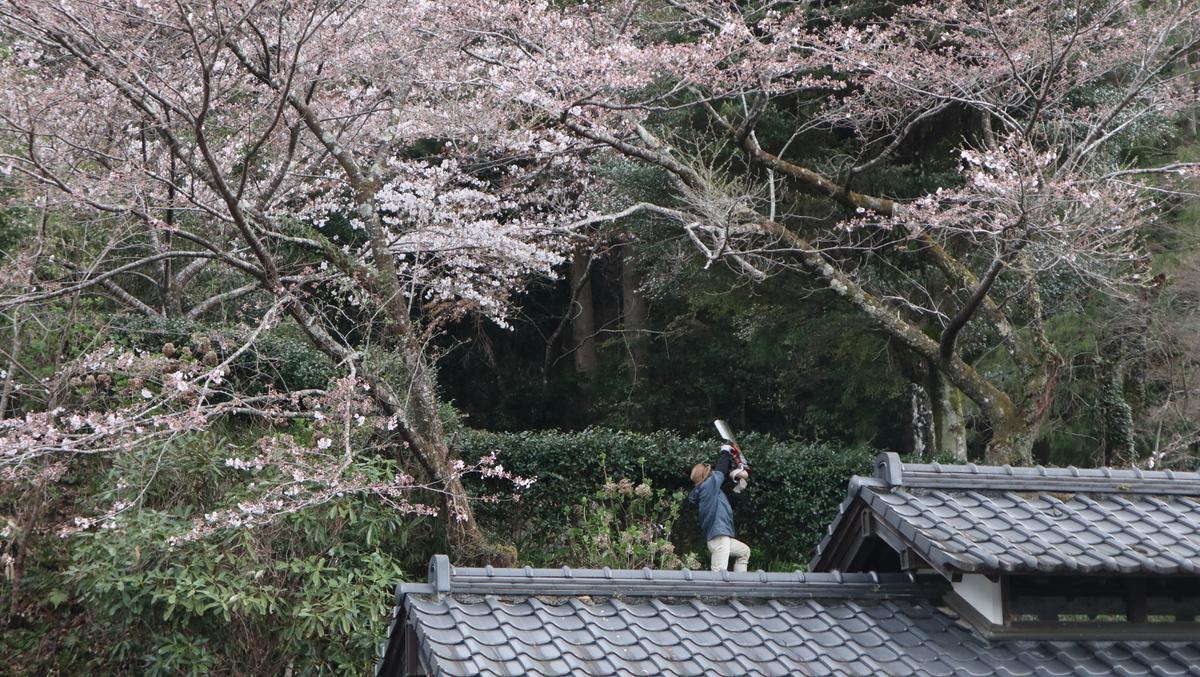 f:id:nshintaro:20210320103839j:plain