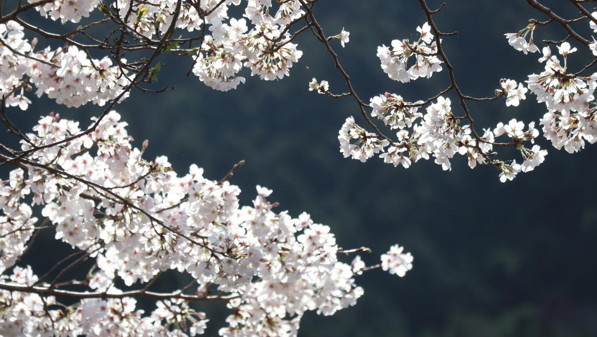 f:id:nshintaro:20210325174732j:plain
