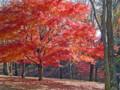 鶴西公園の秋