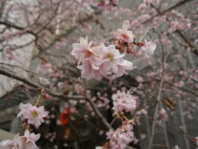 f:id:ntadashi2:20120129134604j:image