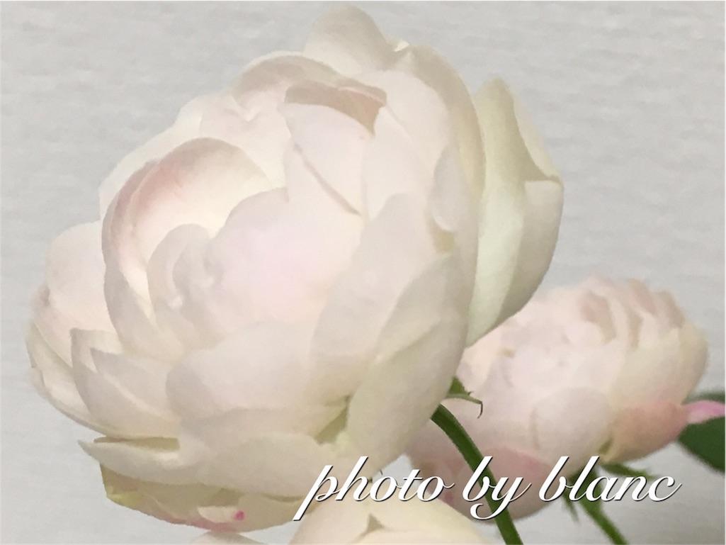 f:id:nuage_blanc:20161009201331j:image