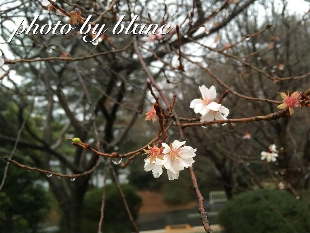 f:id:nuage_blanc:20170108223342j:image