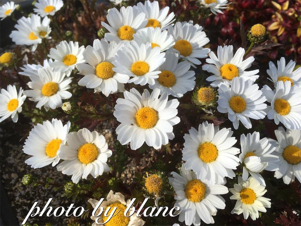 f:id:nuage_blanc:20170320105340j:image