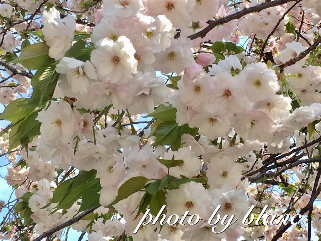 f:id:nuage_blanc:20170416161716j:image