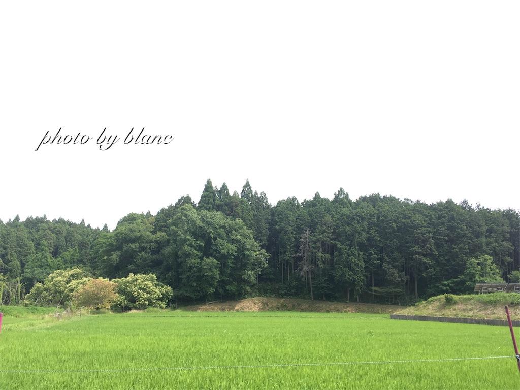 f:id:nuage_blanc:20170625104829j:image