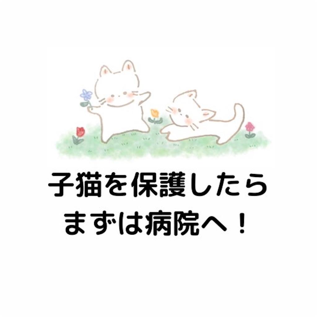 f:id:nuinuinyanko:20210526212050j:image