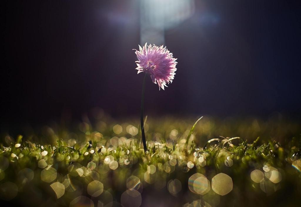 光に輝く花の写真