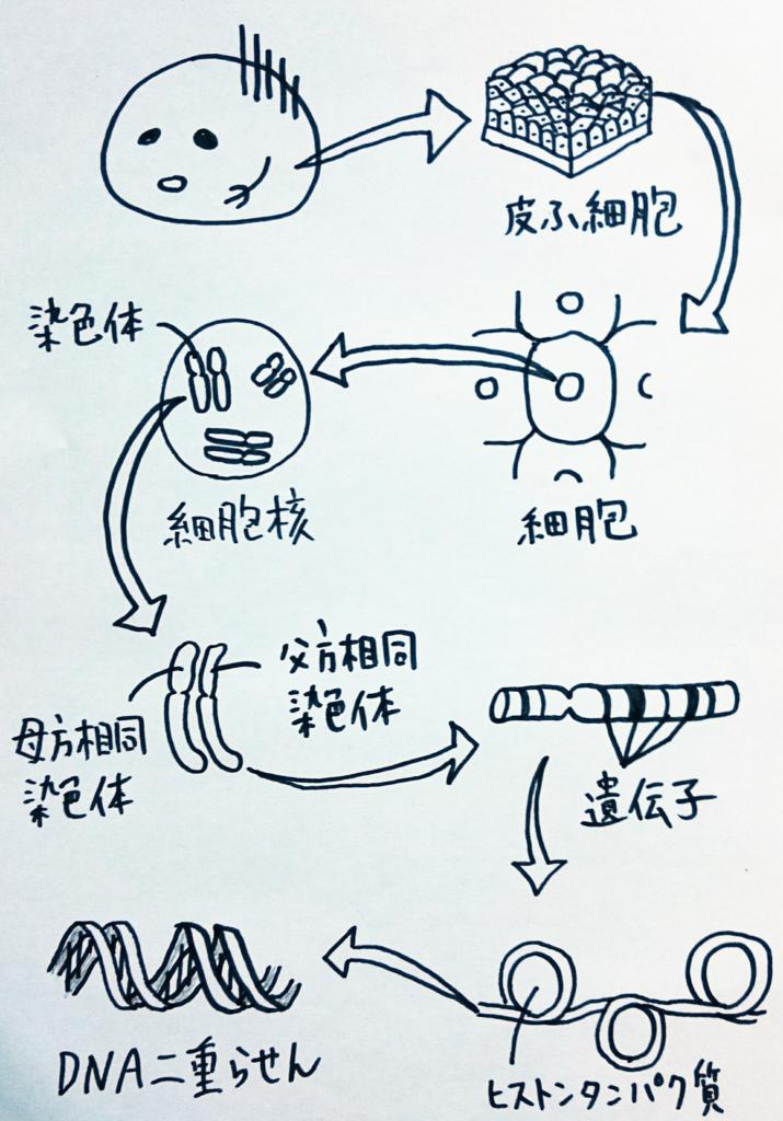 f:id:nukoyamanuko:20161211232253j:plain