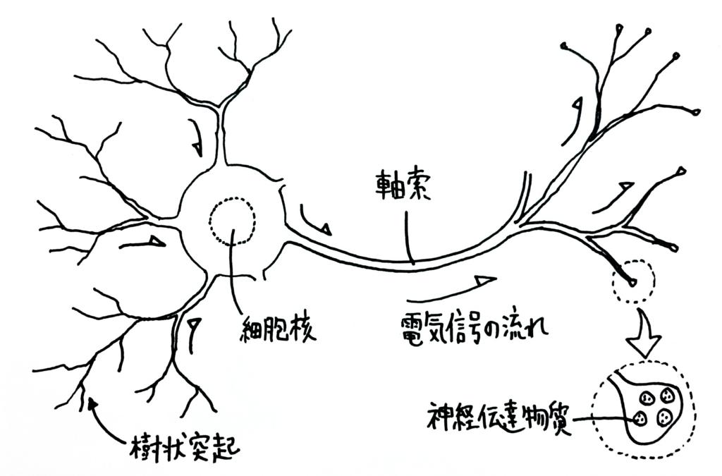 f:id:nukoyamanuko:20170223061205j:plain