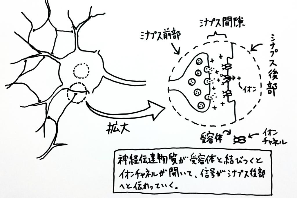 f:id:nukoyamanuko:20170223061230j:plain