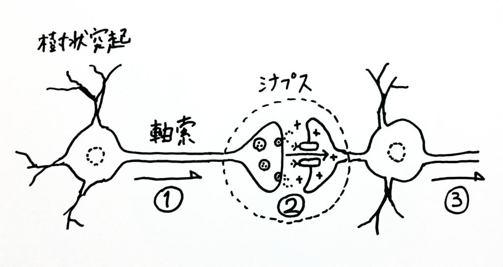 f:id:nukoyamanuko:20170223061251j:plain