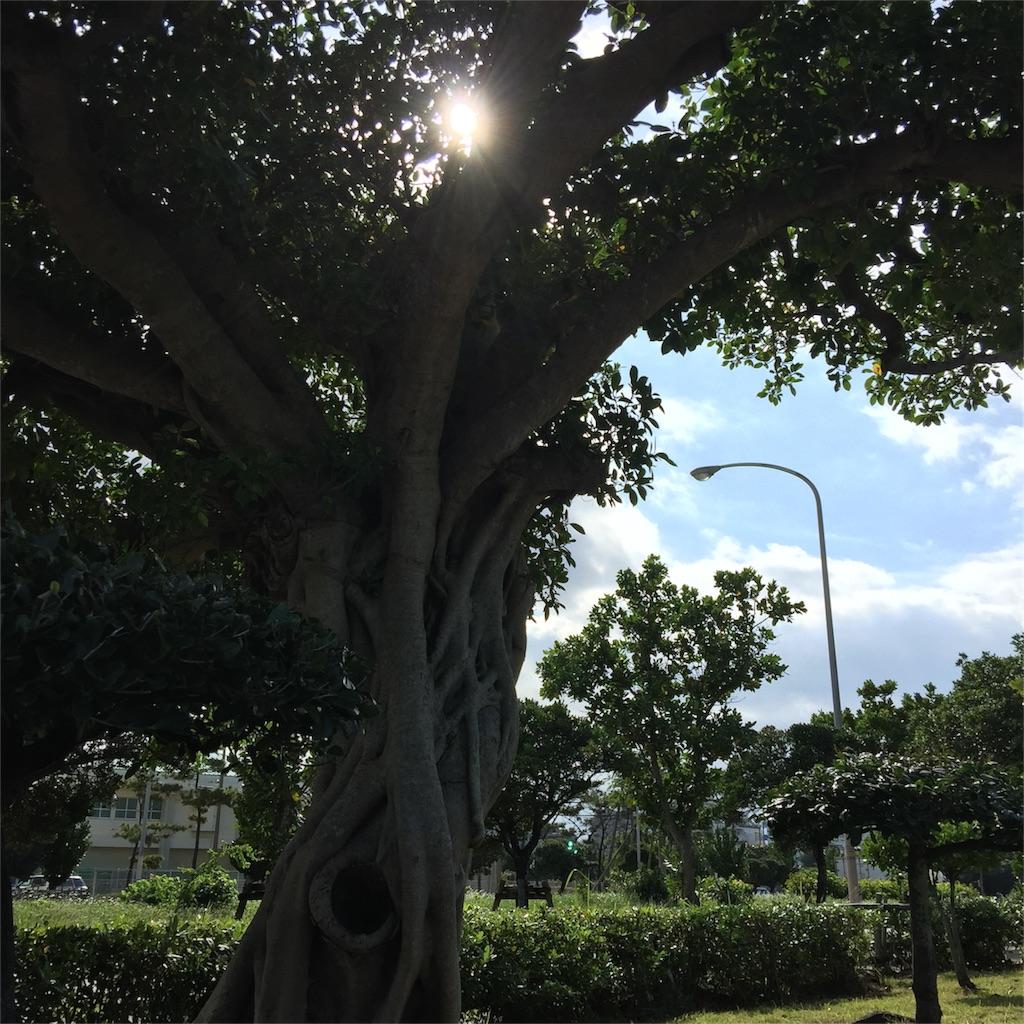 f:id:nukunukuhidamari:20161215094904j:image