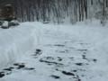 [雪のアプローチ][冬][雪掻き後]