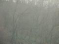 [木々][冬][霧]