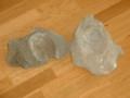 [化石][ハマグリとホタテ][複合]