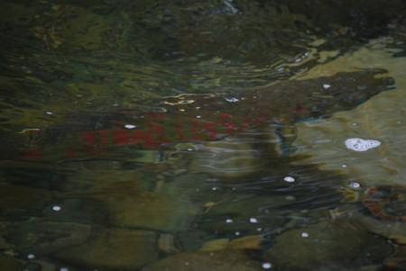 f:id:numapy:20090915124347j:image:right:w450
