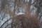 [100308コクワ][樹上の雪]