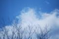 [170228裸木と彩雲]