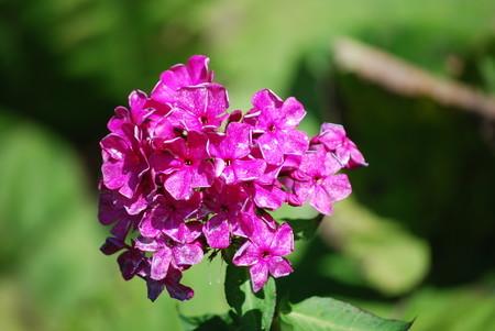 [180925何の花?」