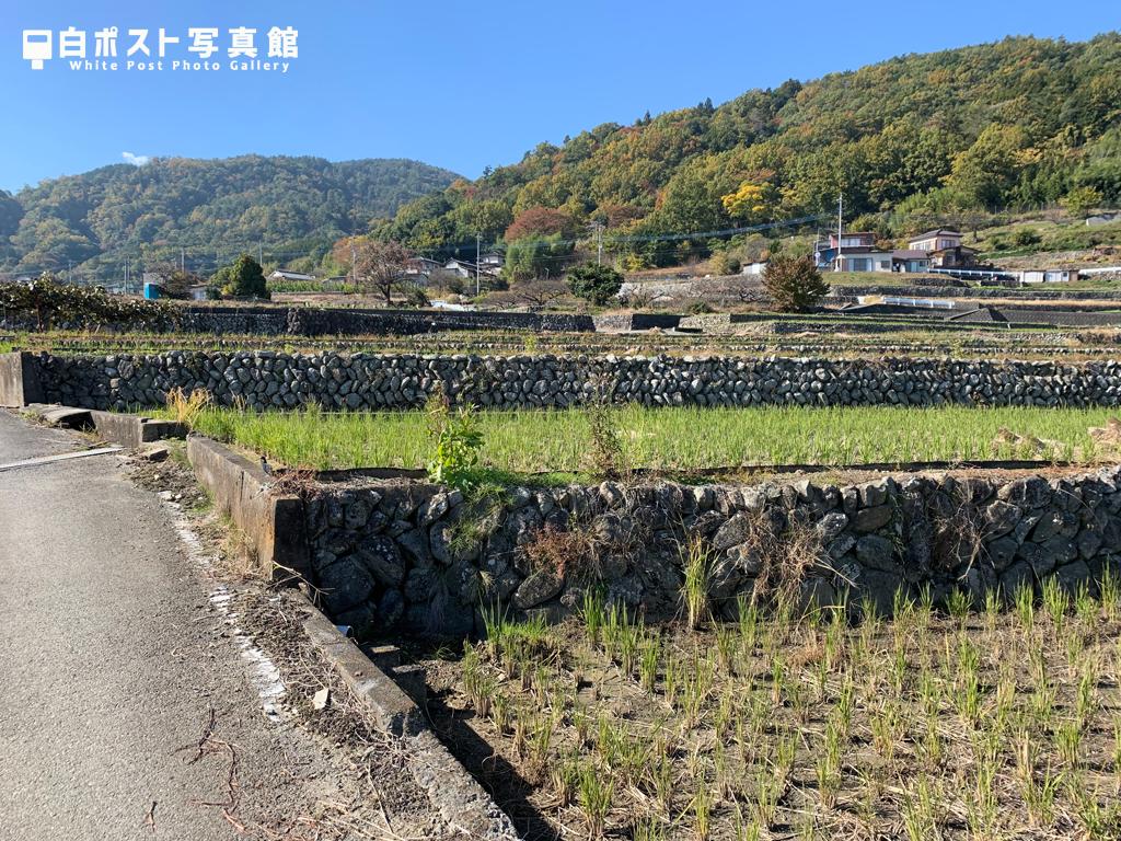 𣇃米の棚田
