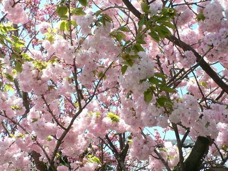 f:id:nurikabe-majin:20050424121853:image