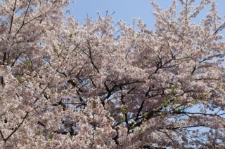f:id:nurikabe-majin:20090409130149j:image