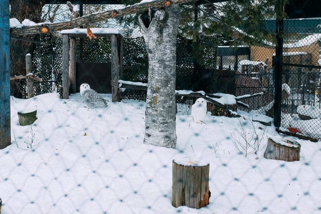 AIRDO20周年ひがし北海道フリーパス_鉄道の旅_旭山動物園_ふくろう