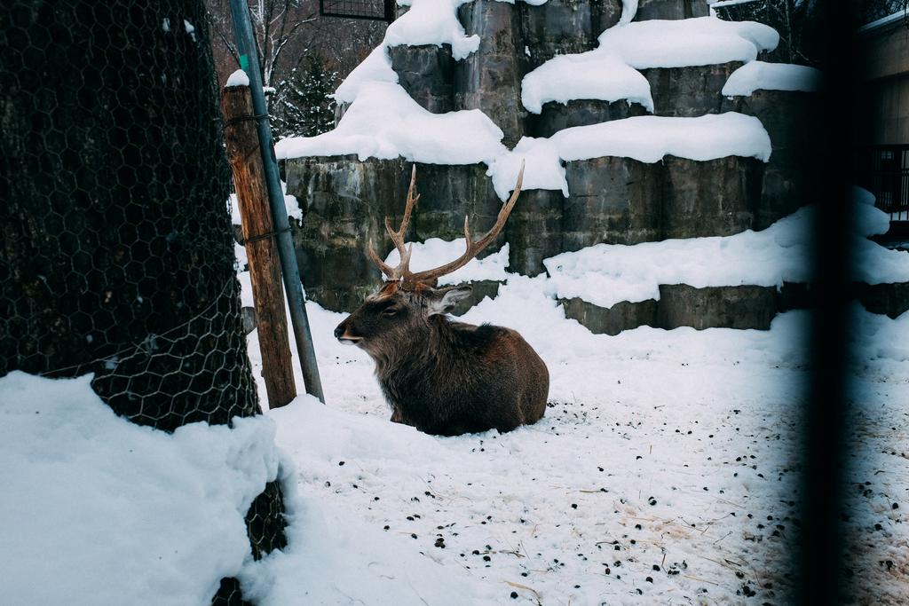 AIRDO20周年ひがし北海道フリーパス_鉄道の旅_旭山動物園_鹿