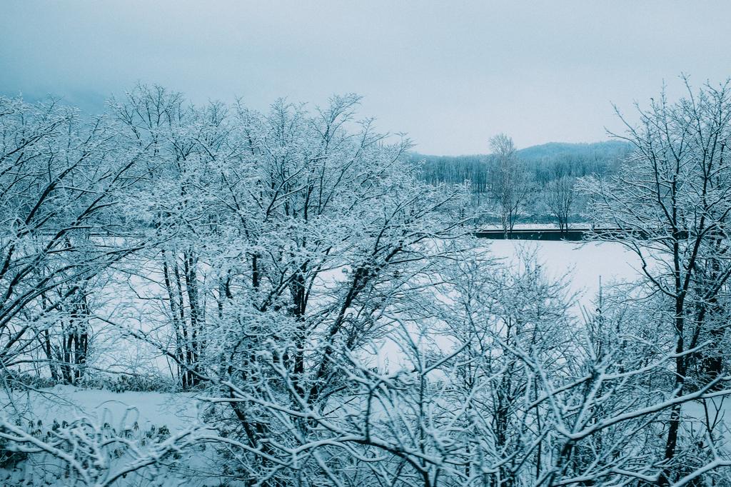 AIRDO20周年ひがし北海道フリーパス_鉄道の旅_ライラックカムイからの車窓