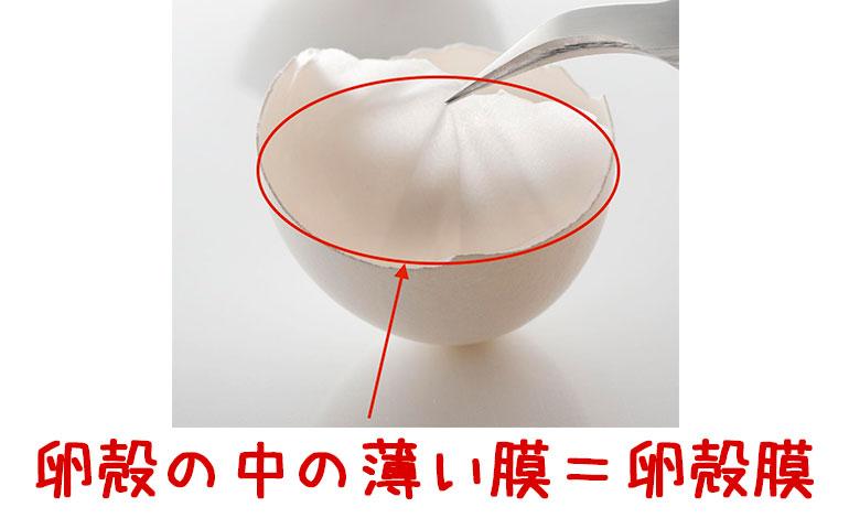 卵殻の中の薄い膜が卵殻膜です。
