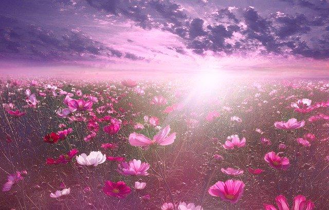 夜明けの花畑